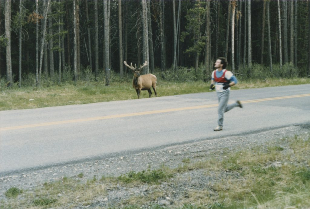 an elk (Wapiti in Cree) watching Murray Armstrong run past on the other side of the highway
